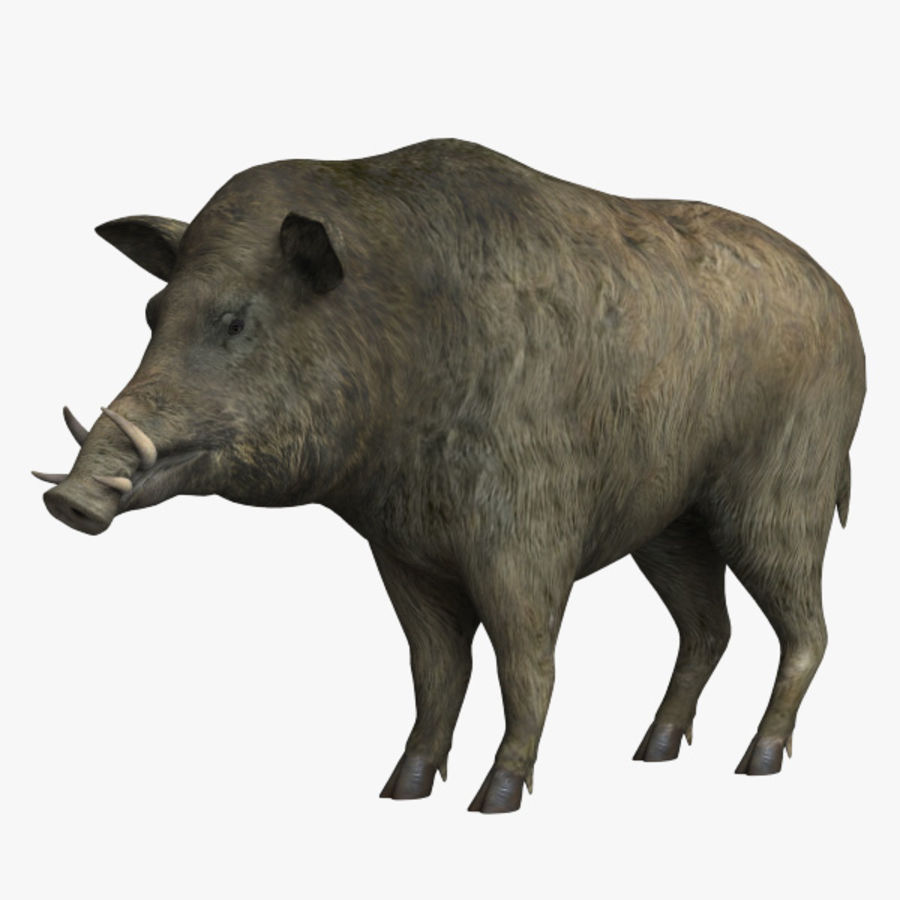 Cinghiale royalty-free 3d model - Preview no. 1