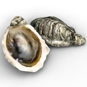 Oester 3d model