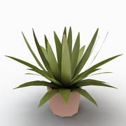 Long Leaf Plant 3d model