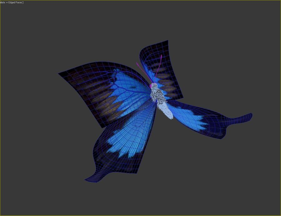 Latający motyl royalty-free 3d model - Preview no. 13