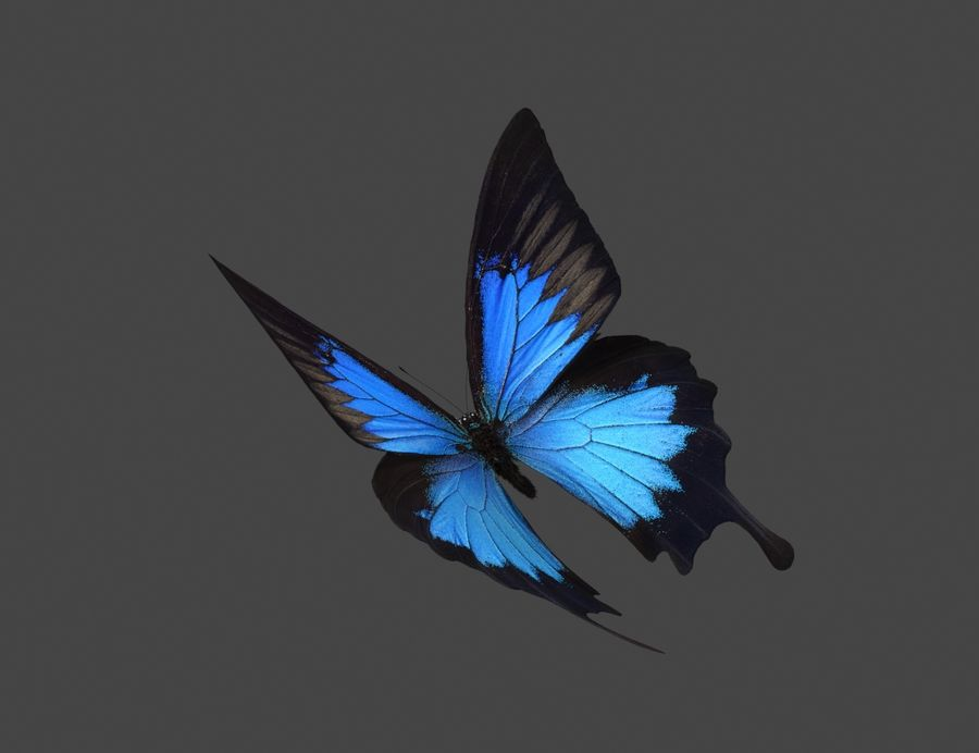 Latający motyl royalty-free 3d model - Preview no. 1