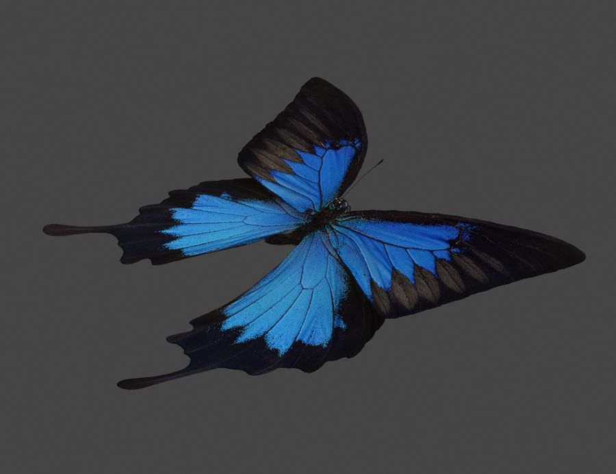 Latający motyl royalty-free 3d model - Preview no. 5