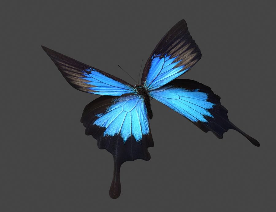 Latający motyl royalty-free 3d model - Preview no. 2