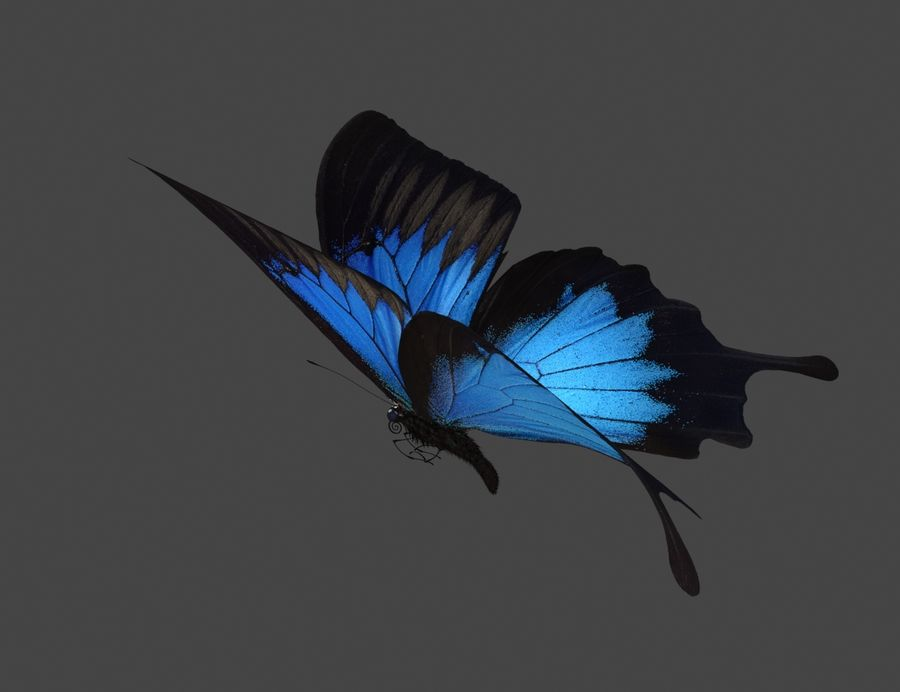 Latający motyl royalty-free 3d model - Preview no. 4