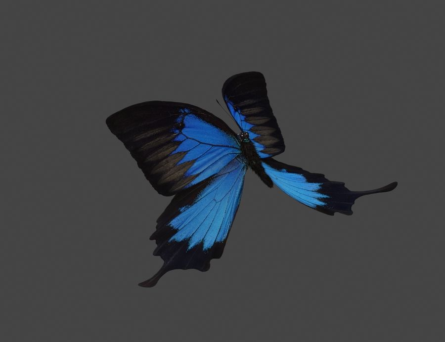 Latający motyl royalty-free 3d model - Preview no. 6