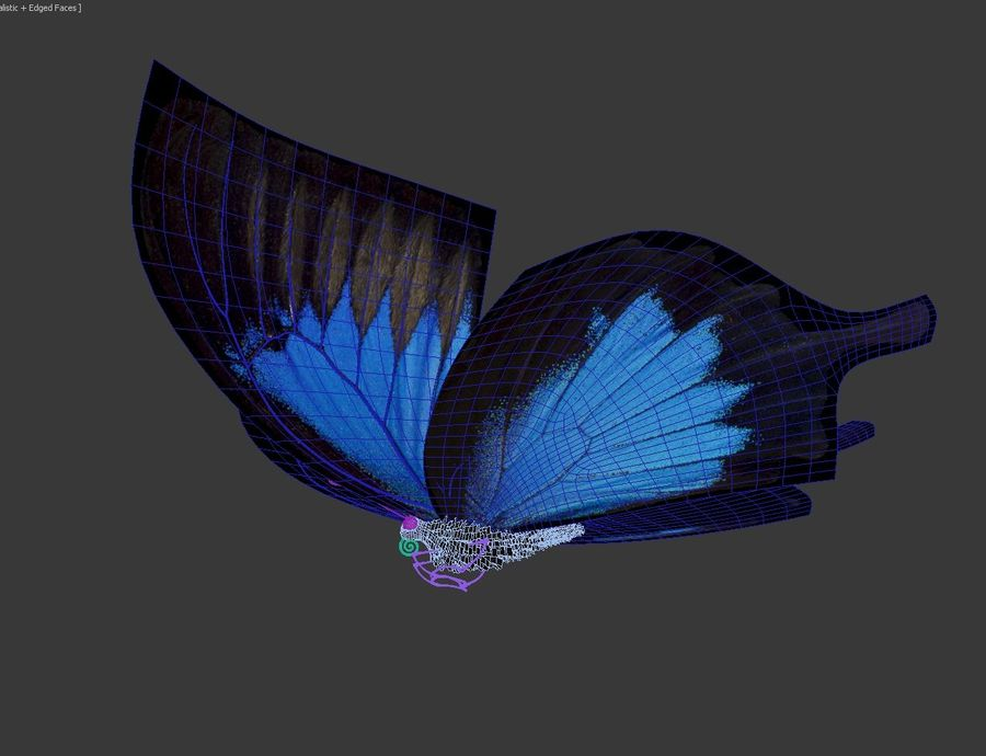 Latający motyl royalty-free 3d model - Preview no. 12