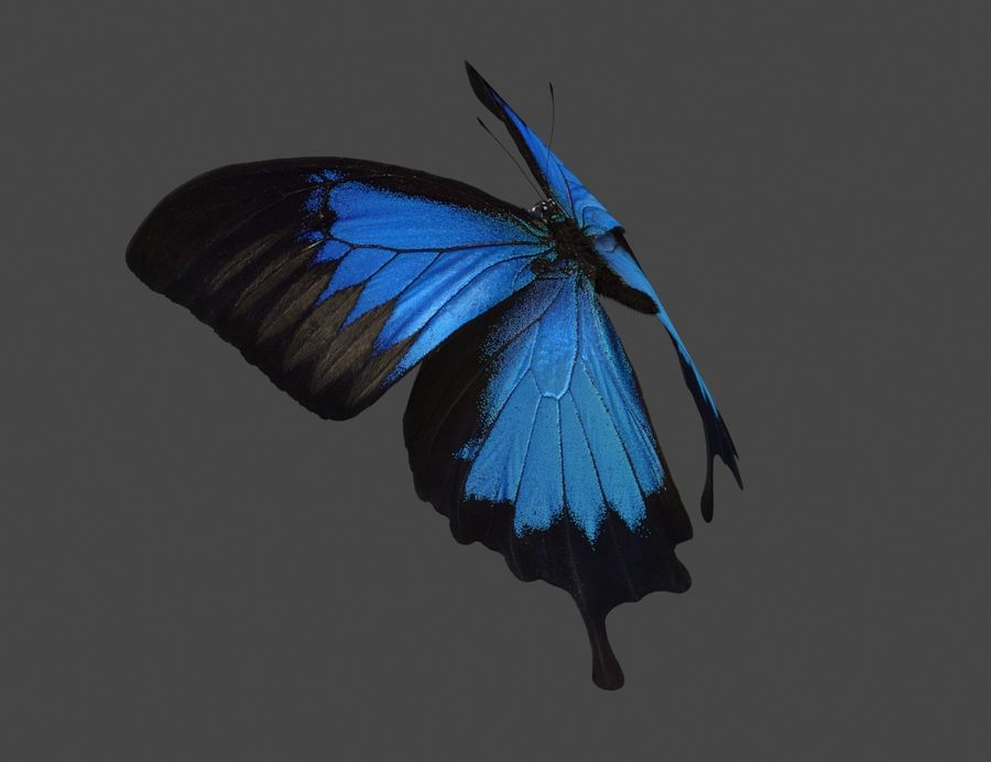 Latający motyl royalty-free 3d model - Preview no. 3