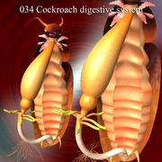 Kakkerlakken spijsvertering 3d model