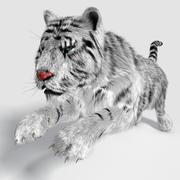 Tigre Bianca Siberiana 3d model