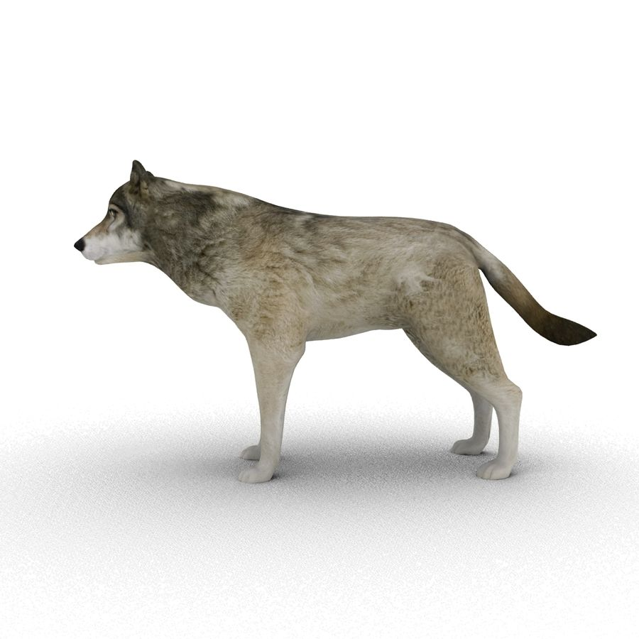 Wolf royalty-free 3d model - Preview no. 7