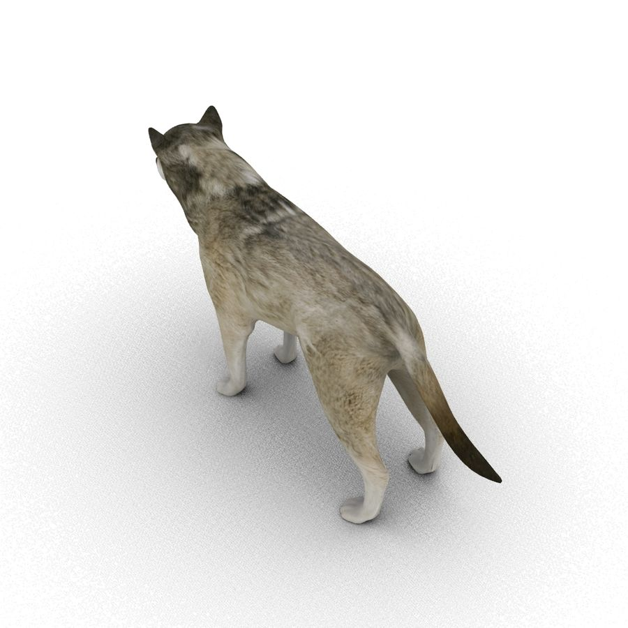 Wolf royalty-free 3d model - Preview no. 5