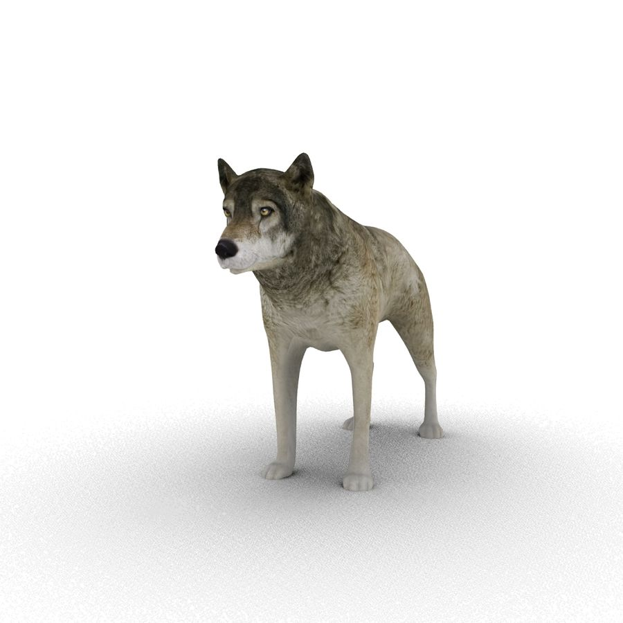 Wolf royalty-free 3d model - Preview no. 8