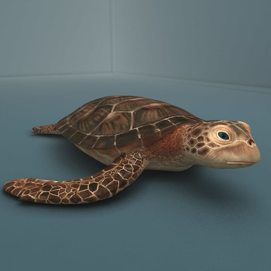 カメの海 royalty-free 3d model - Preview no. 2