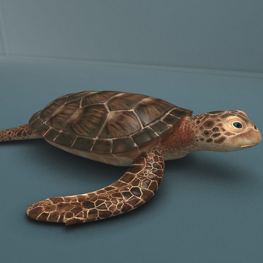 カメの海 royalty-free 3d model - Preview no. 3