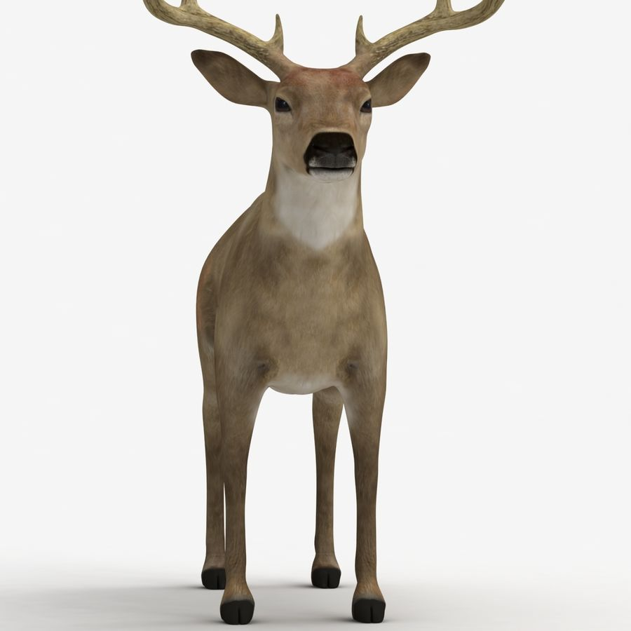 Hirsch royalty-free 3d model - Preview no. 7