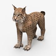 Lynx 갈색 3d model