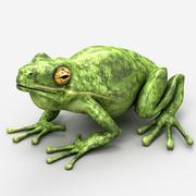 Frosch 3d model