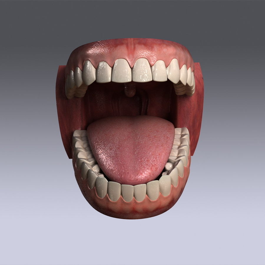 人类的牙齿 royalty-free 3d model - Preview no. 3