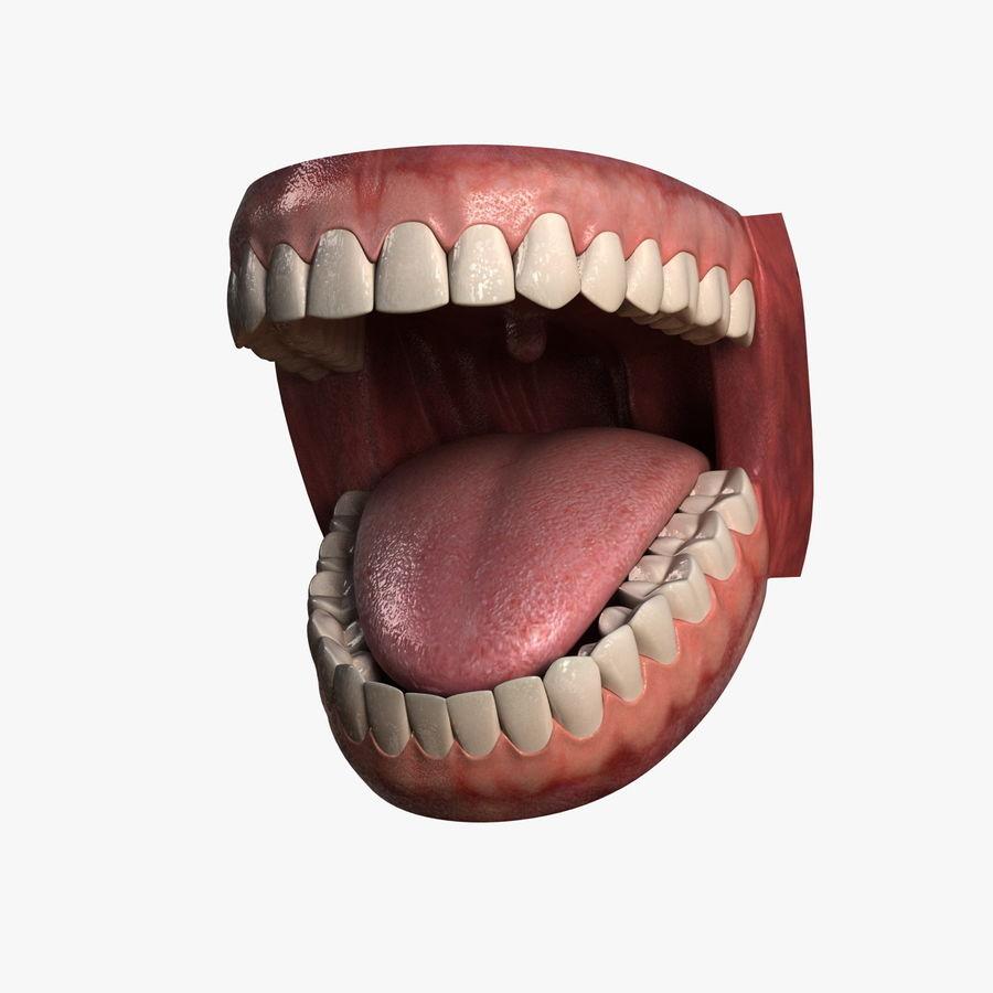 人类的牙齿 royalty-free 3d model - Preview no. 1