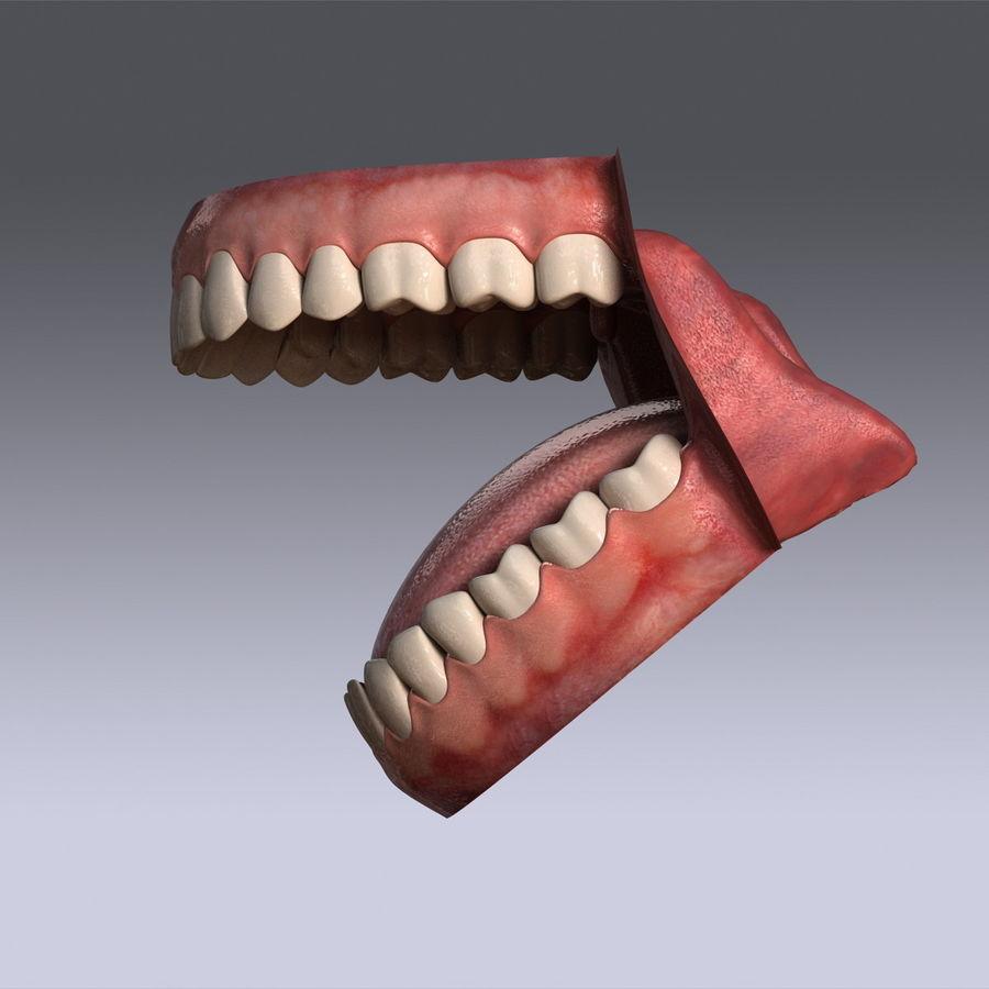 人类的牙齿 royalty-free 3d model - Preview no. 7