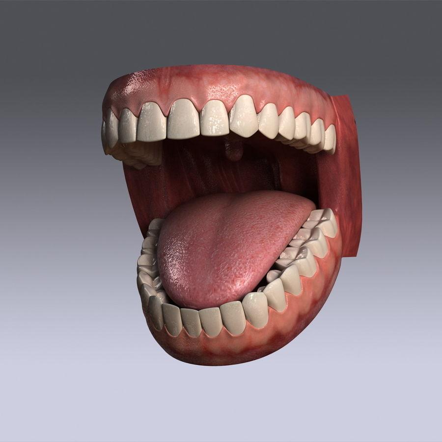 人类的牙齿 royalty-free 3d model - Preview no. 2