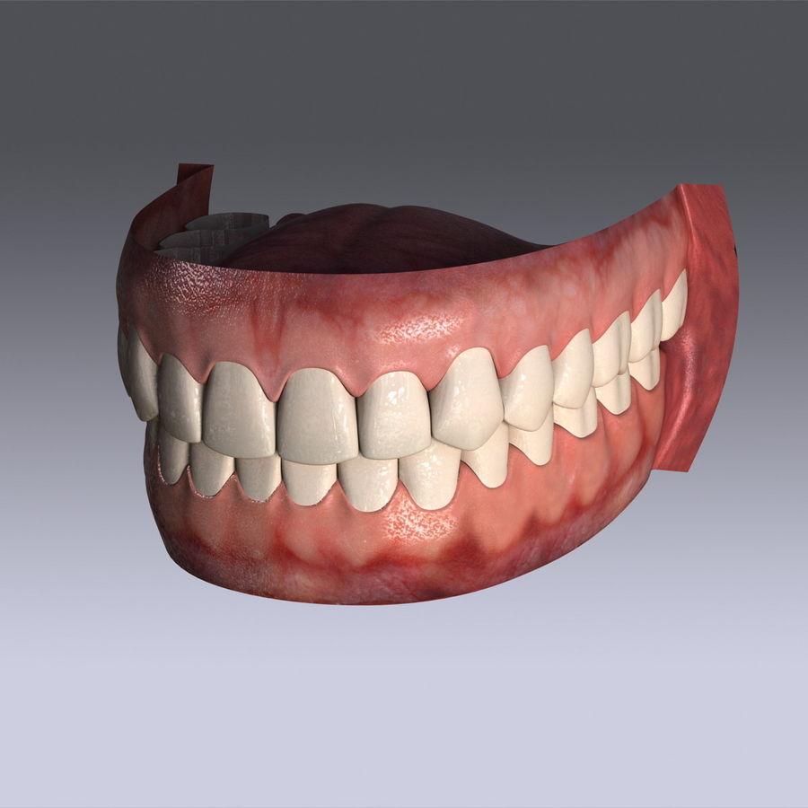 人类的牙齿 royalty-free 3d model - Preview no. 8