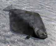 Atlantic halibut (low poly) 3d model
