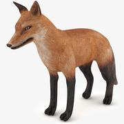 Fox prêt à jouer 3d model