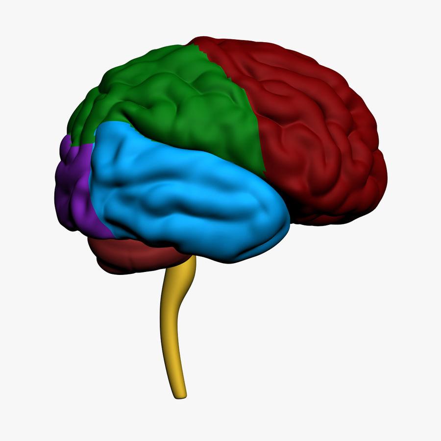 Ludzki mózg royalty-free 3d model - Preview no. 1