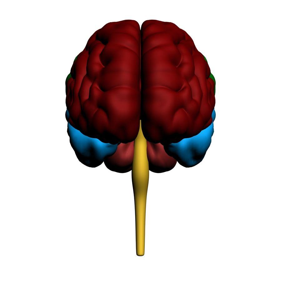 Mänsklig hjärna royalty-free 3d model - Preview no. 8
