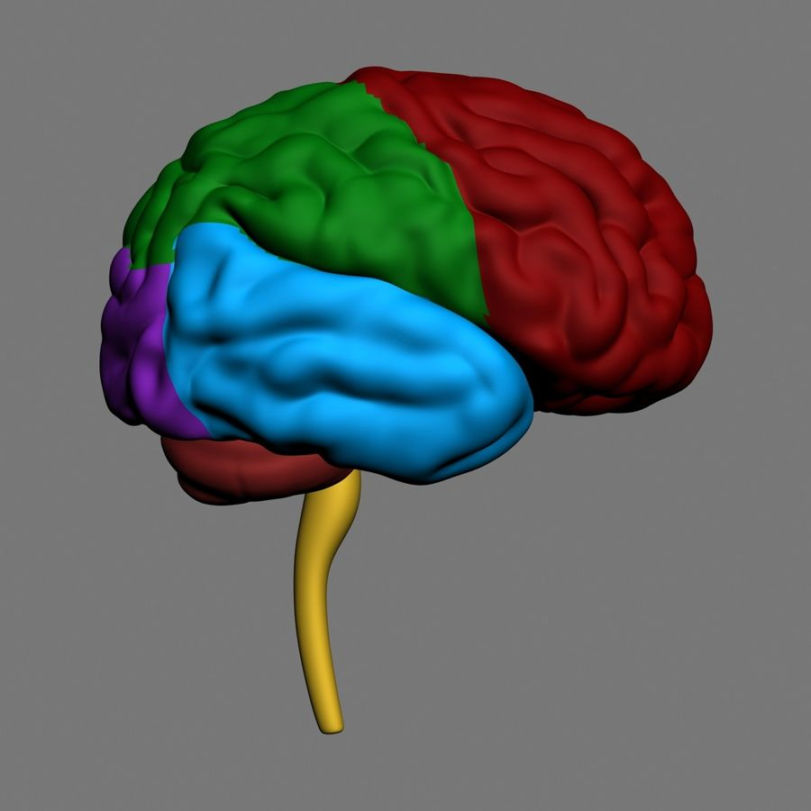 Mänsklig hjärna royalty-free 3d model - Preview no. 2