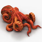 Octopus1 3d model