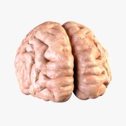 Hjärna 3d model