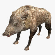 Cinghiale Low Poly 3d model
