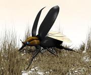 жук 3d model