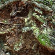 자연 장면 : 뿌리 3d model
