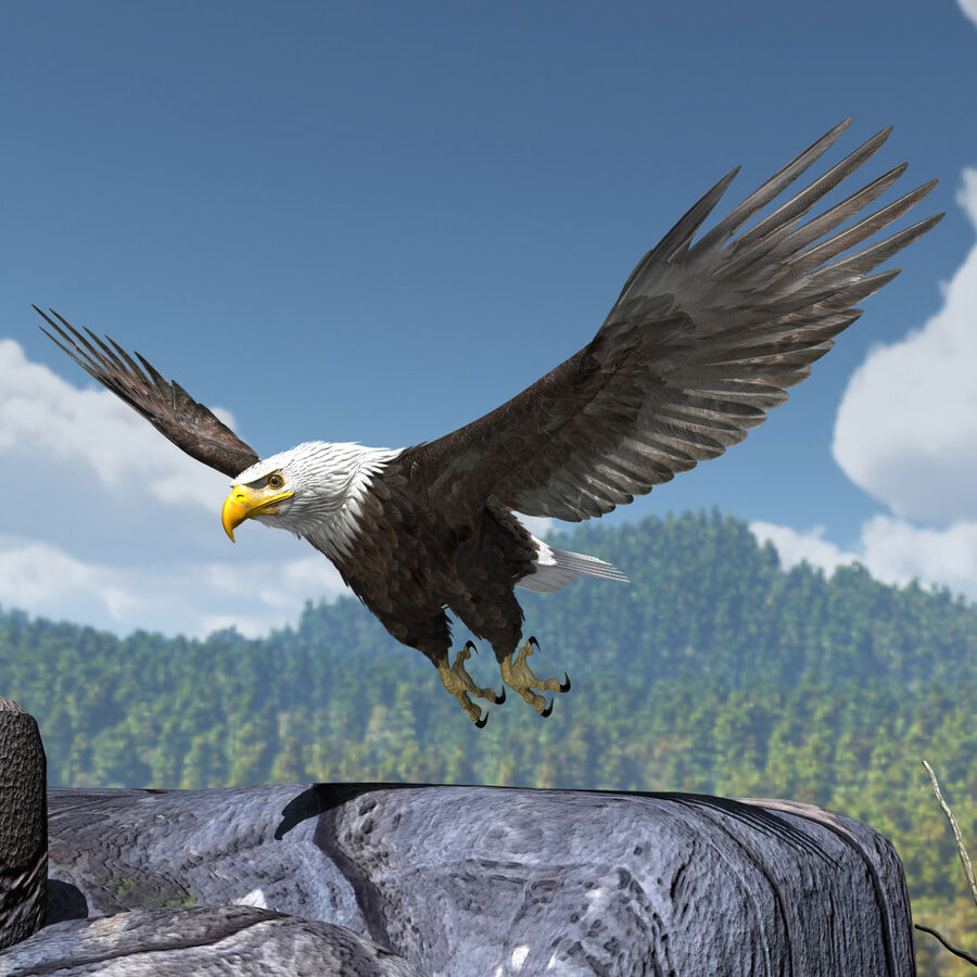 American Bald Eagle royalty-free 3d model - Preview no. 19