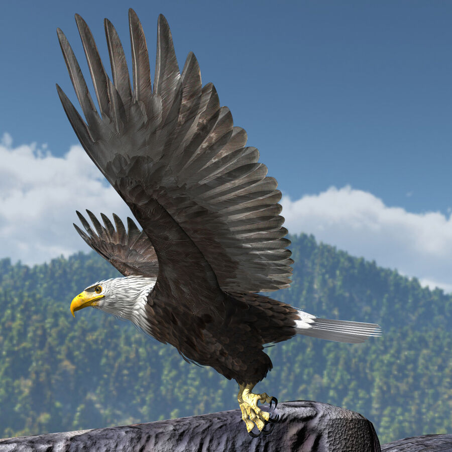 American Bald Eagle royalty-free 3d model - Preview no. 2