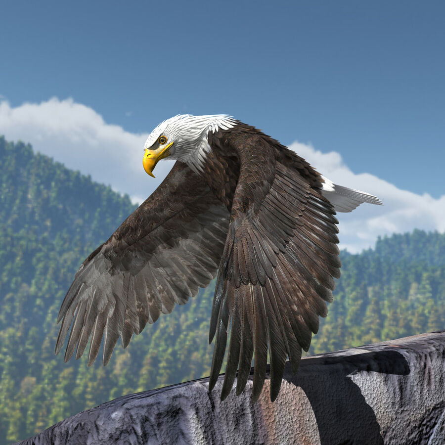 American Bald Eagle royalty-free 3d model - Preview no. 22
