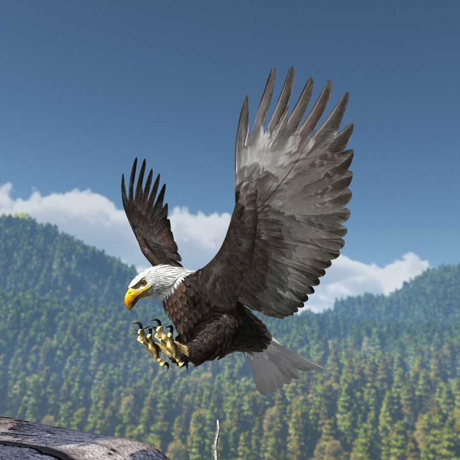 American Bald Eagle royalty-free 3d model - Preview no. 13