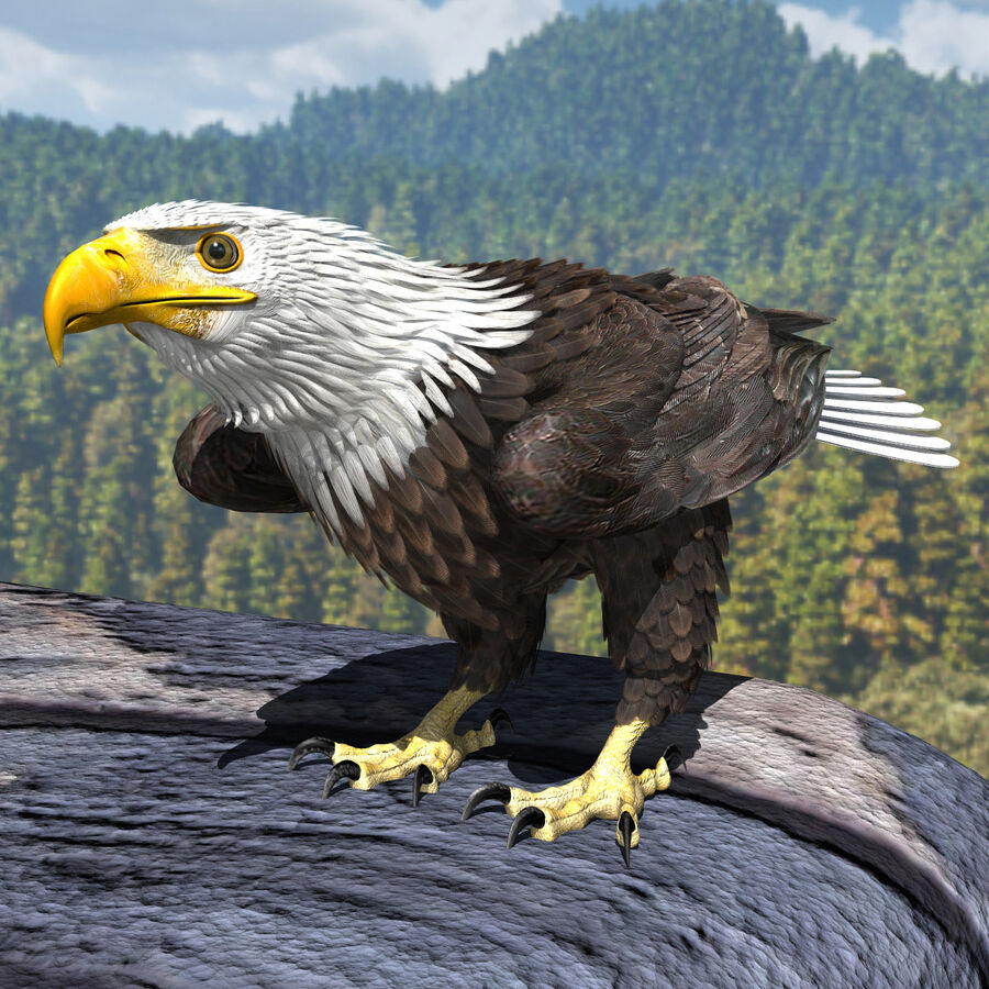 American Bald Eagle royalty-free 3d model - Preview no. 10