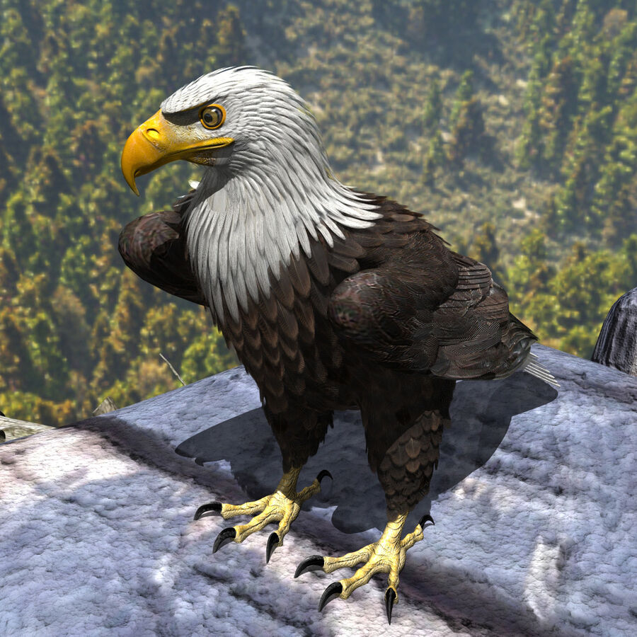American Bald Eagle royalty-free 3d model - Preview no. 3