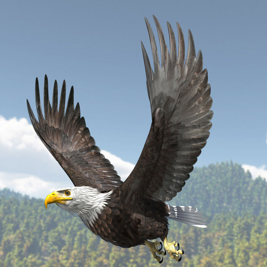 American Bald Eagle royalty-free 3d model - Preview no. 6