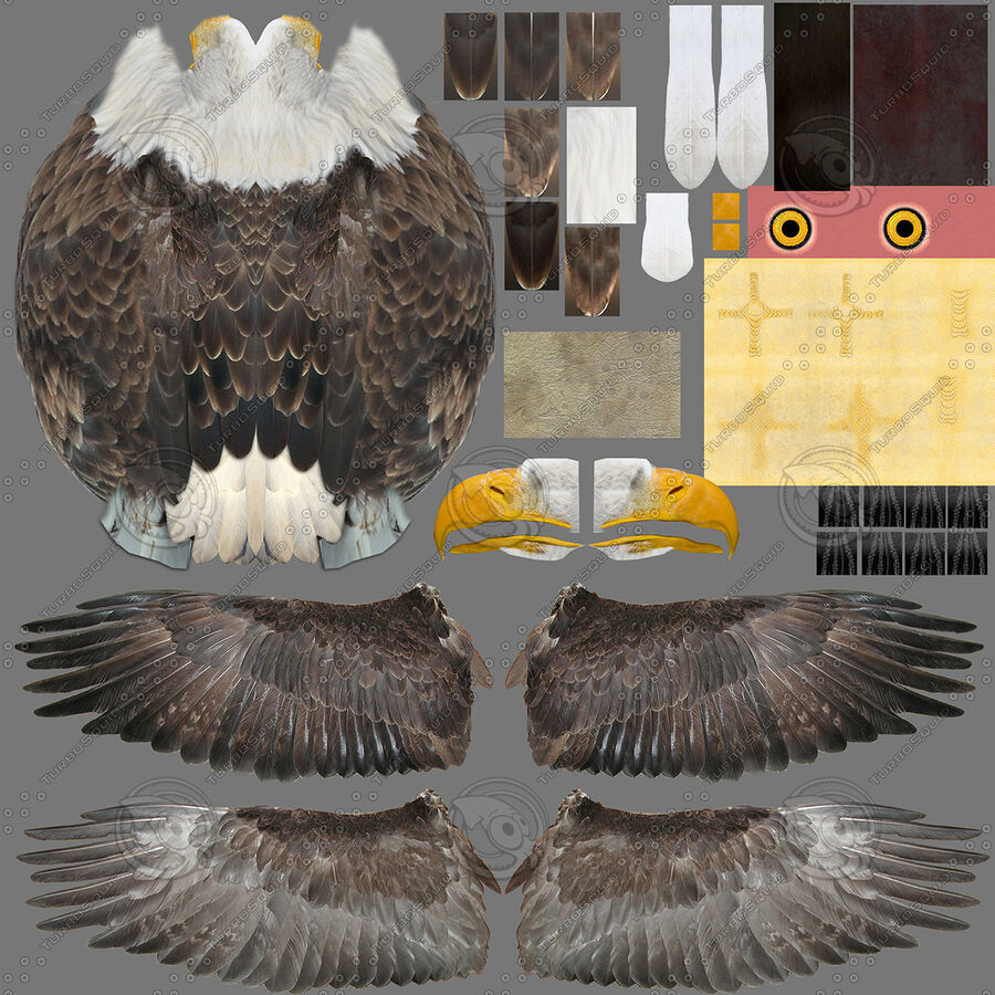 American Bald Eagle royalty-free 3d model - Preview no. 26