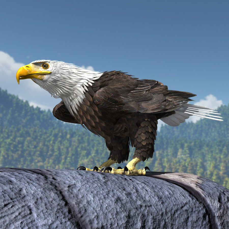 American Bald Eagle royalty-free 3d model - Preview no. 9