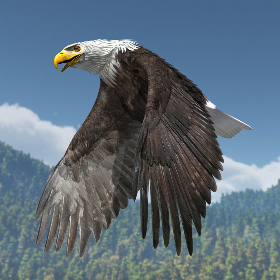 American Bald Eagle royalty-free 3d model - Preview no. 7