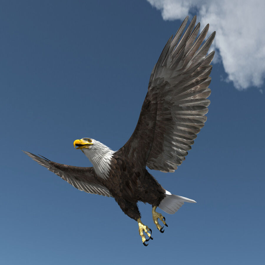 American Bald Eagle royalty-free 3d model - Preview no. 25