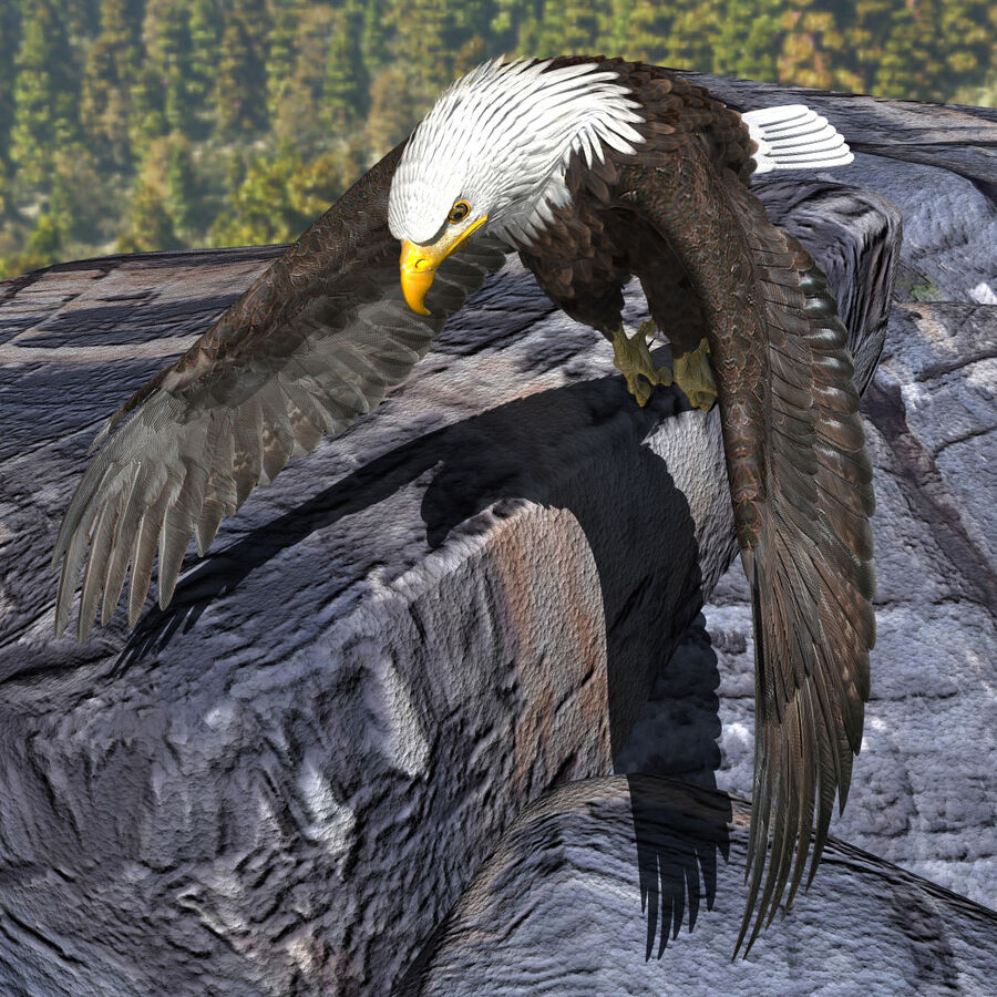 American Bald Eagle royalty-free 3d model - Preview no. 23