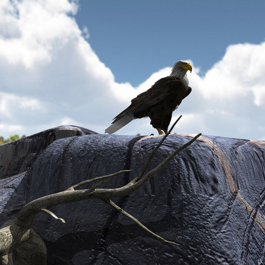 American Bald Eagle royalty-free 3d model - Preview no. 5