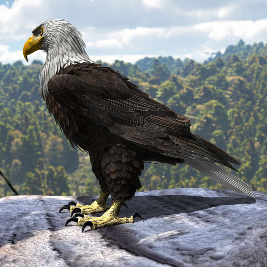 American Bald Eagle royalty-free 3d model - Preview no. 4